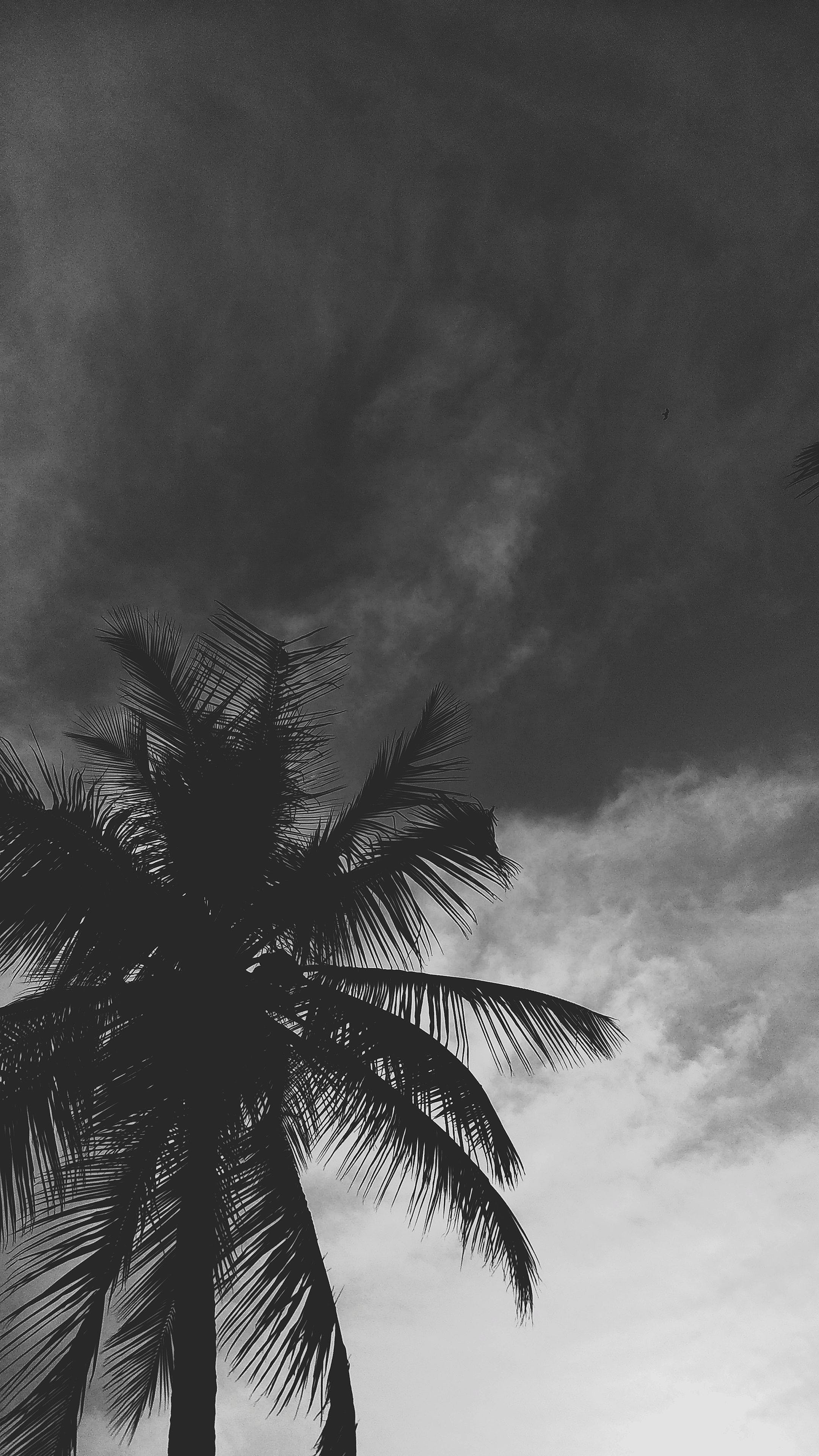 Free stock photo of beach, summer, silhouette, spring