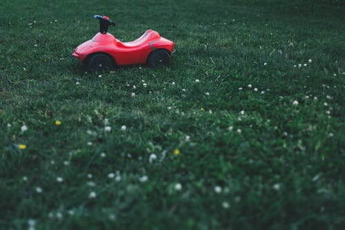Free stock photo of garden, grass, landscape, lawn