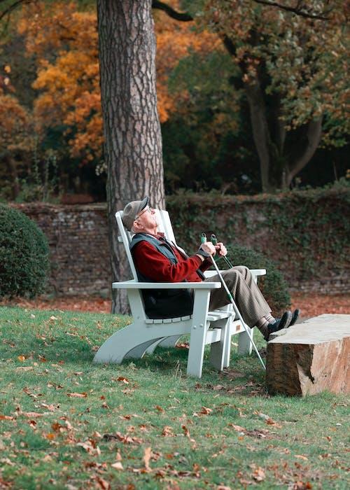 Imagine de stoc gratuită din adult, agrement, arbore