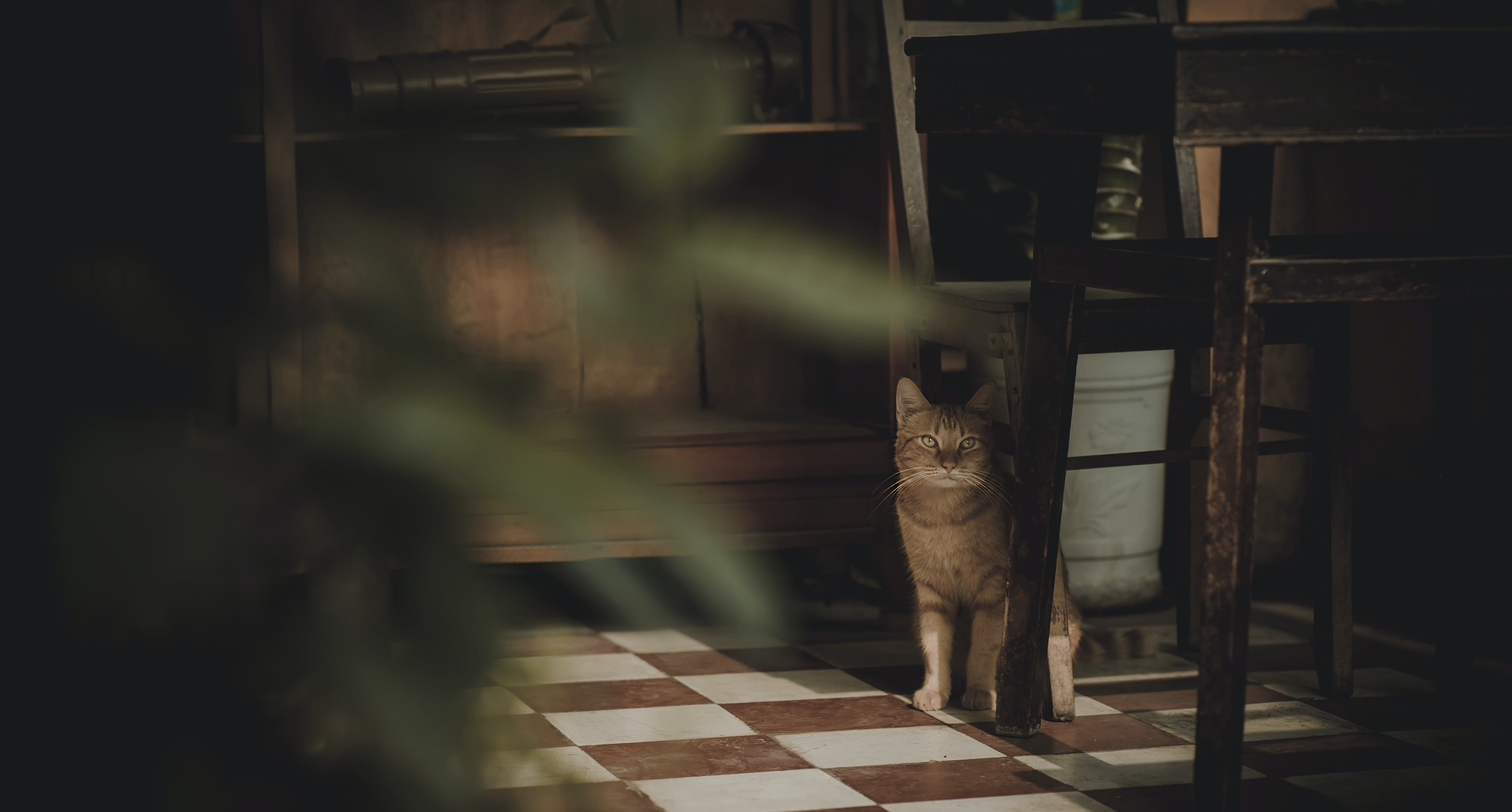 Photography of Cat Near Chair