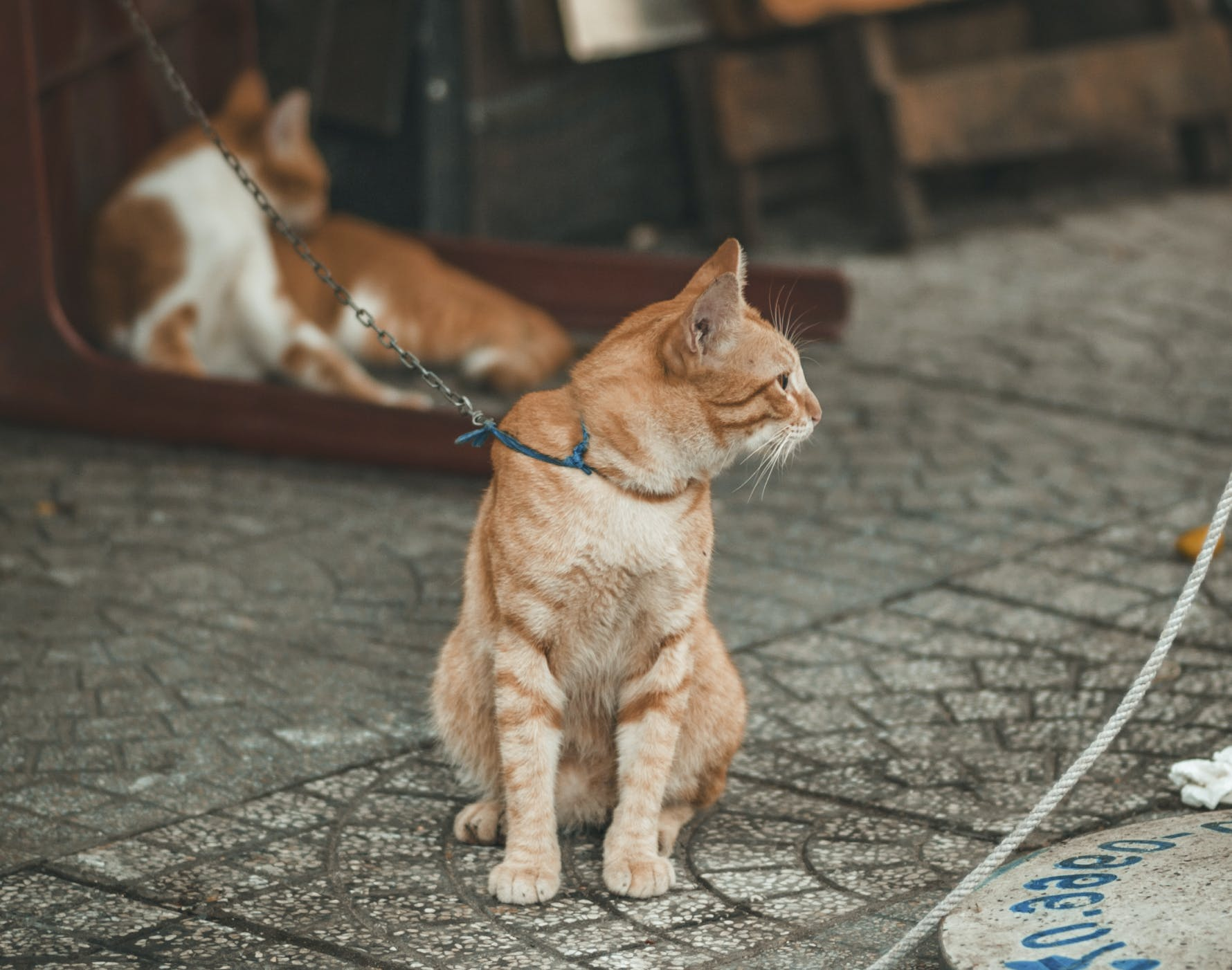 Photography of Orange Tabby Cat