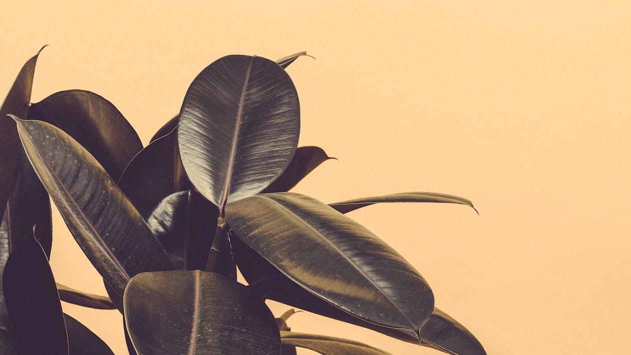 botanisk, färger, inomhus växter
