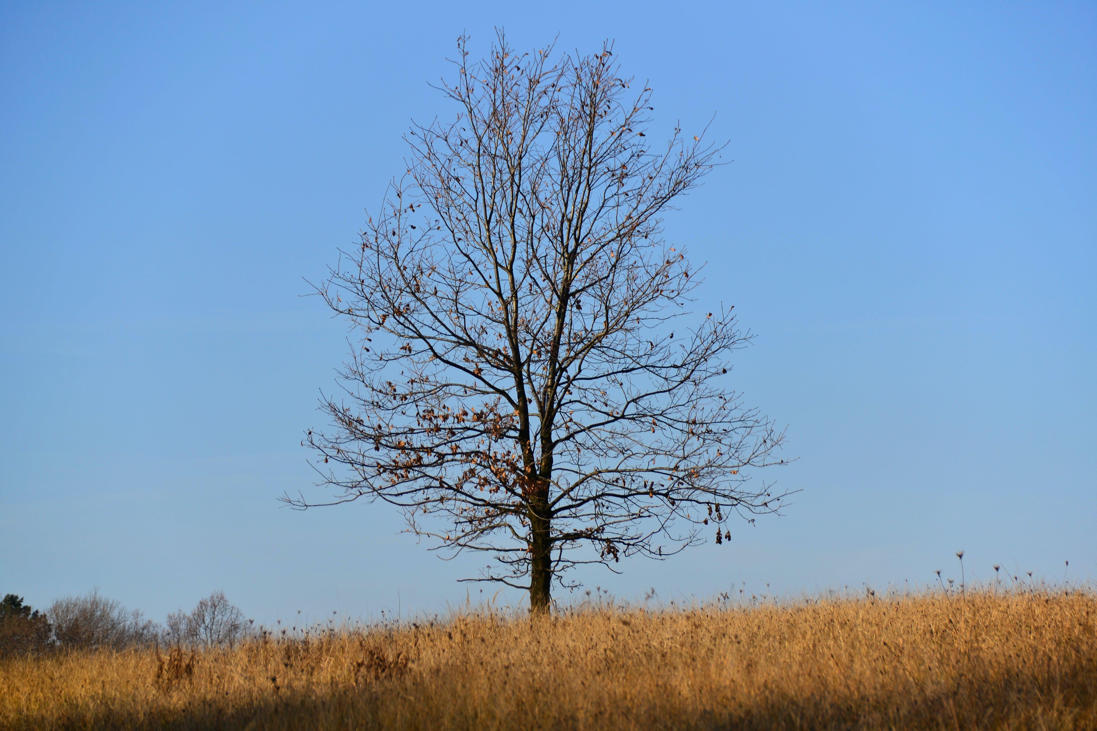Kostenloses Stock Foto zu außerorts, bäume, blätter, blauer himmel