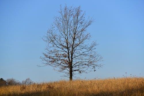 Darmowe zdjęcie z galerii z błękitne niebo, drzewa, krajobraz, malowniczy