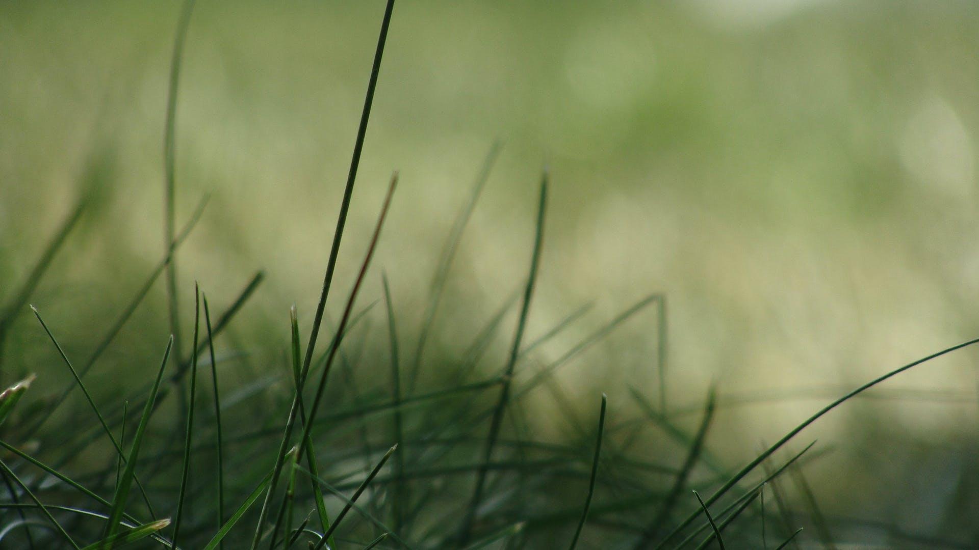 Kostenloses Stock Foto zu gras, grün, makro, pflanze