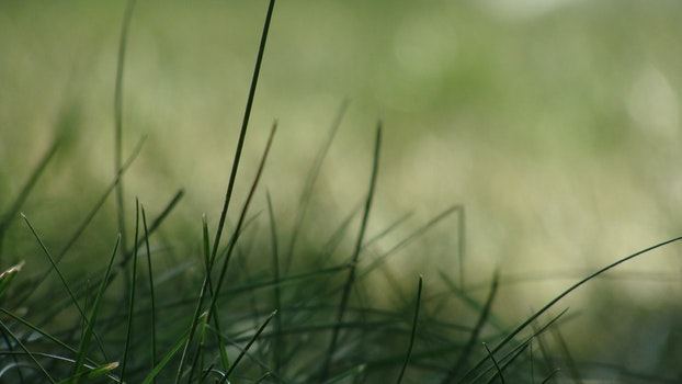 Free stock photo of grass, plant, green, macro