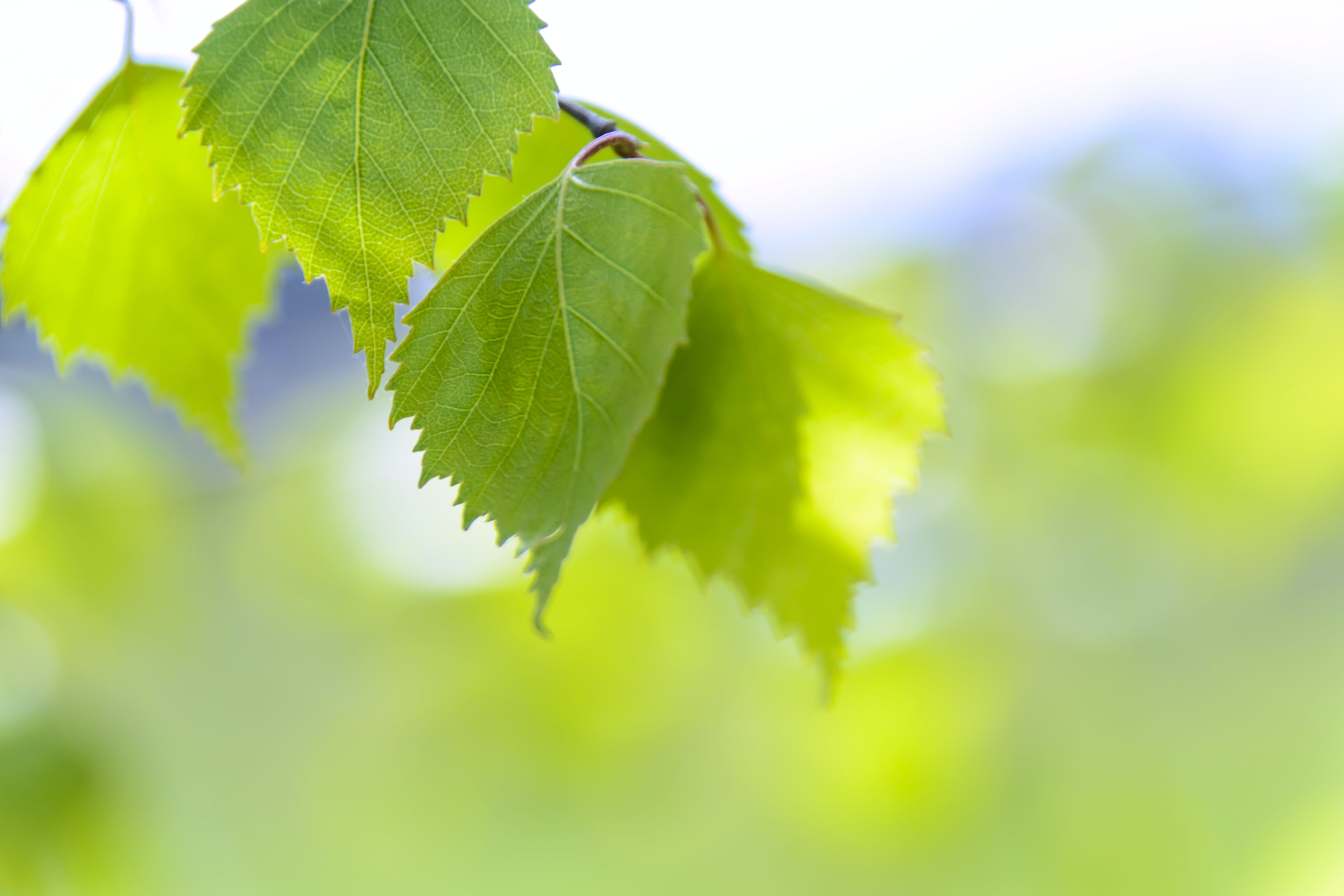 Focus Photography of Green Leaves
