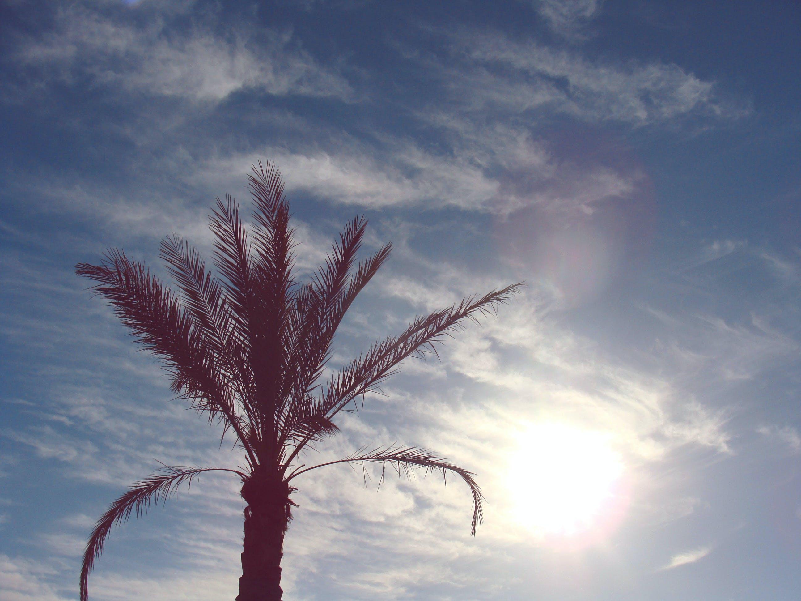 Kostenloses Stock Foto zu himmel, sonne, sonnig, wolken