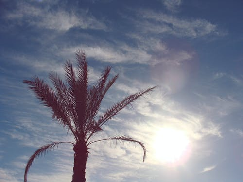 Green Palm Tree Under Clear Blue Sky