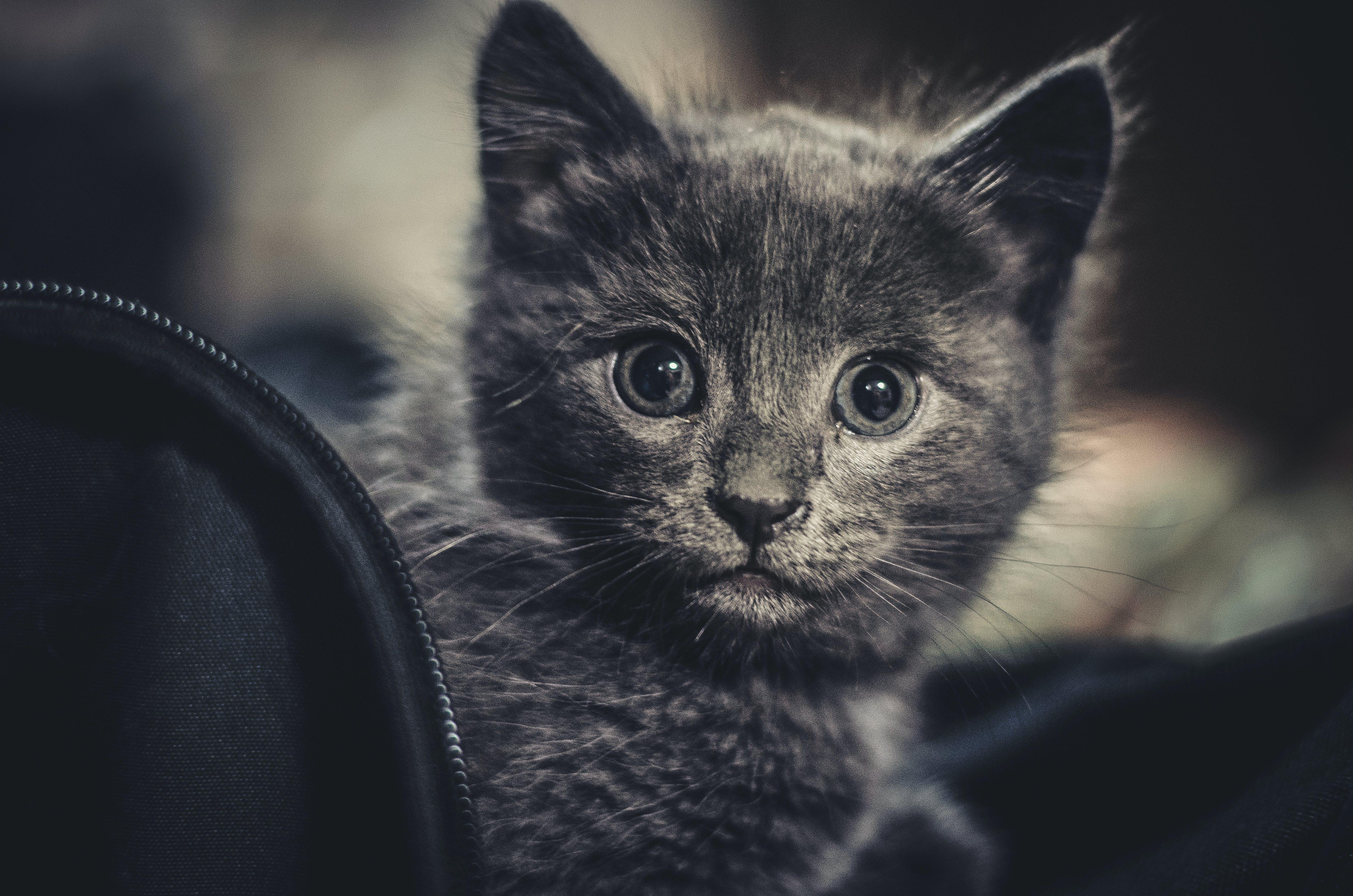 คลังภาพถ่ายฟรี ของ น่ารัก, น้อย, ลูกแมว, สัตว์