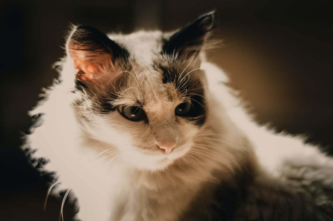 """sulfur: """"Picture of my cat!  """""""