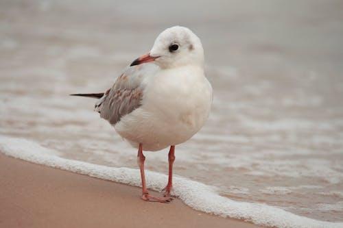 White and Gray Bird on Shore