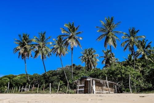 Darmowe zdjęcie z galerii z chata na plaży, chatka, chaty
