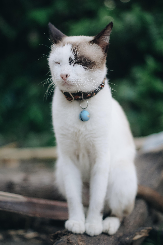 Cat Sitting On Branch