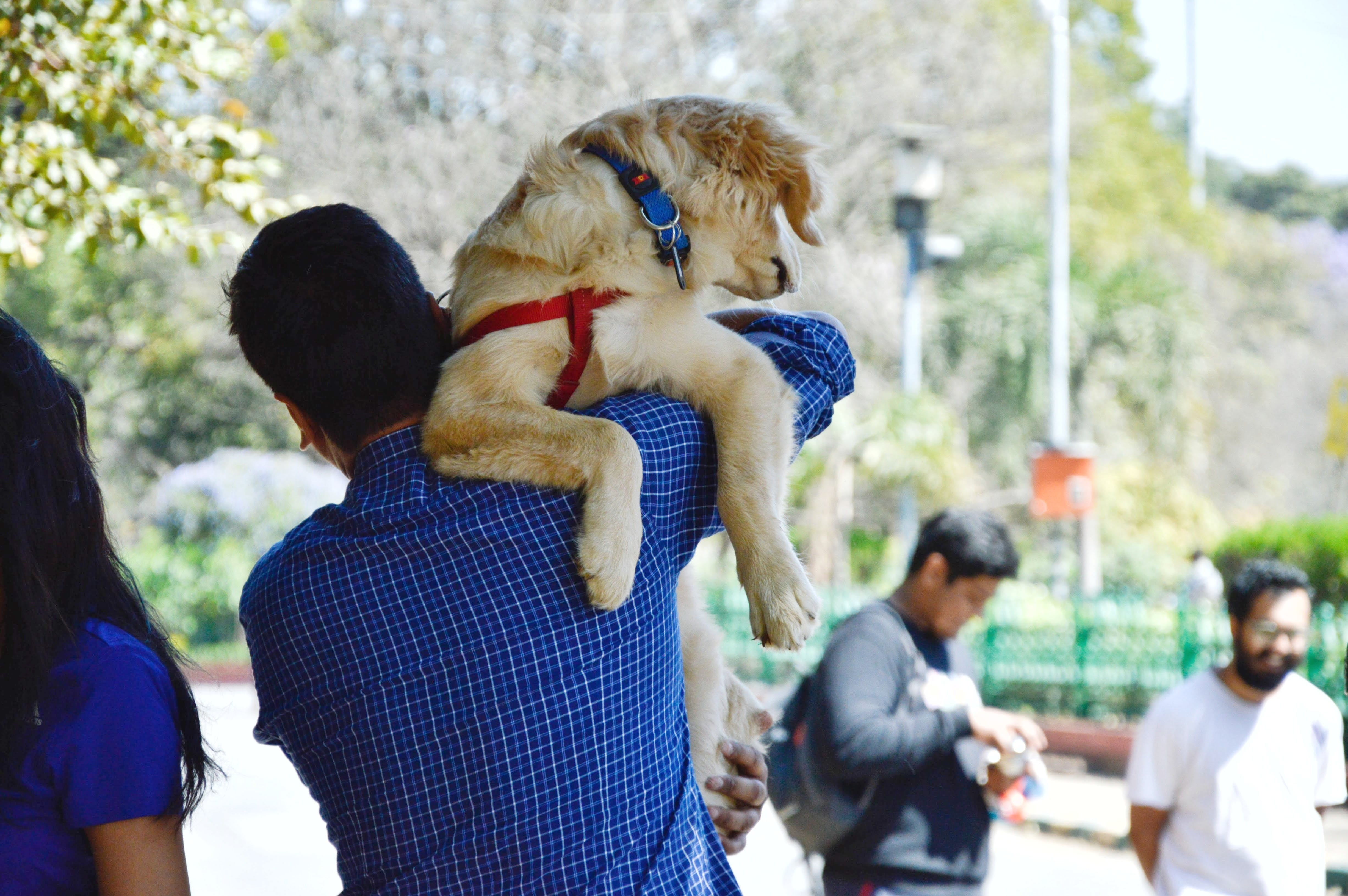 Man In Blue Long-sleeved Shirt Carrying Dog