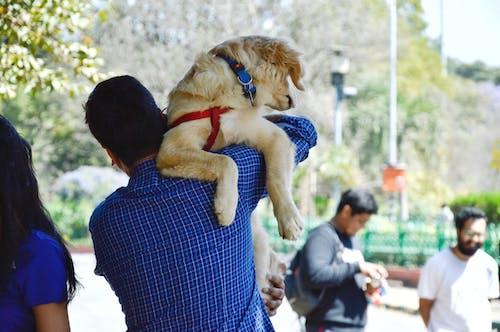 Mann Im Blauen Langärmeligen Hemd, Das Hund Trägt