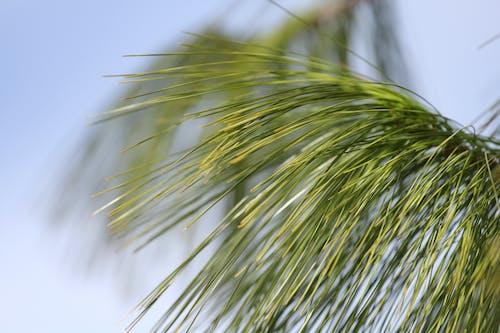 Darmowe zdjęcie z galerii z drzewo, makro, roślina, zielony