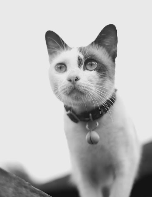 Free stock photo of adorable, animal, black and white