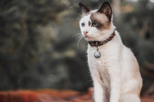 Безкоштовне стокове фото на тему «домашній кіт, кішка, кицька, котячі»