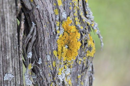 Foto d'estoc gratuïta de arbre, bagul, color, escorça