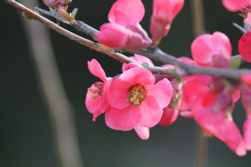 Základová fotografie zdarma na téma jarní květiny, květ růže