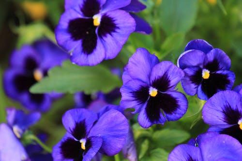 Základová fotografie zdarma na téma kvést, kvetoucí