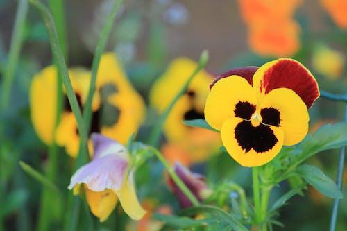 Základová fotografie zdarma na téma jarní květiny, kvetoucí, žlutý květ