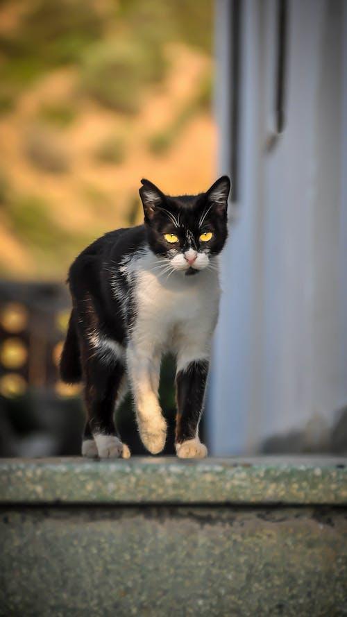 Ảnh lưu trữ miễn phí về con mèo, Hy Lạp, mắt mèo, mèo hoang