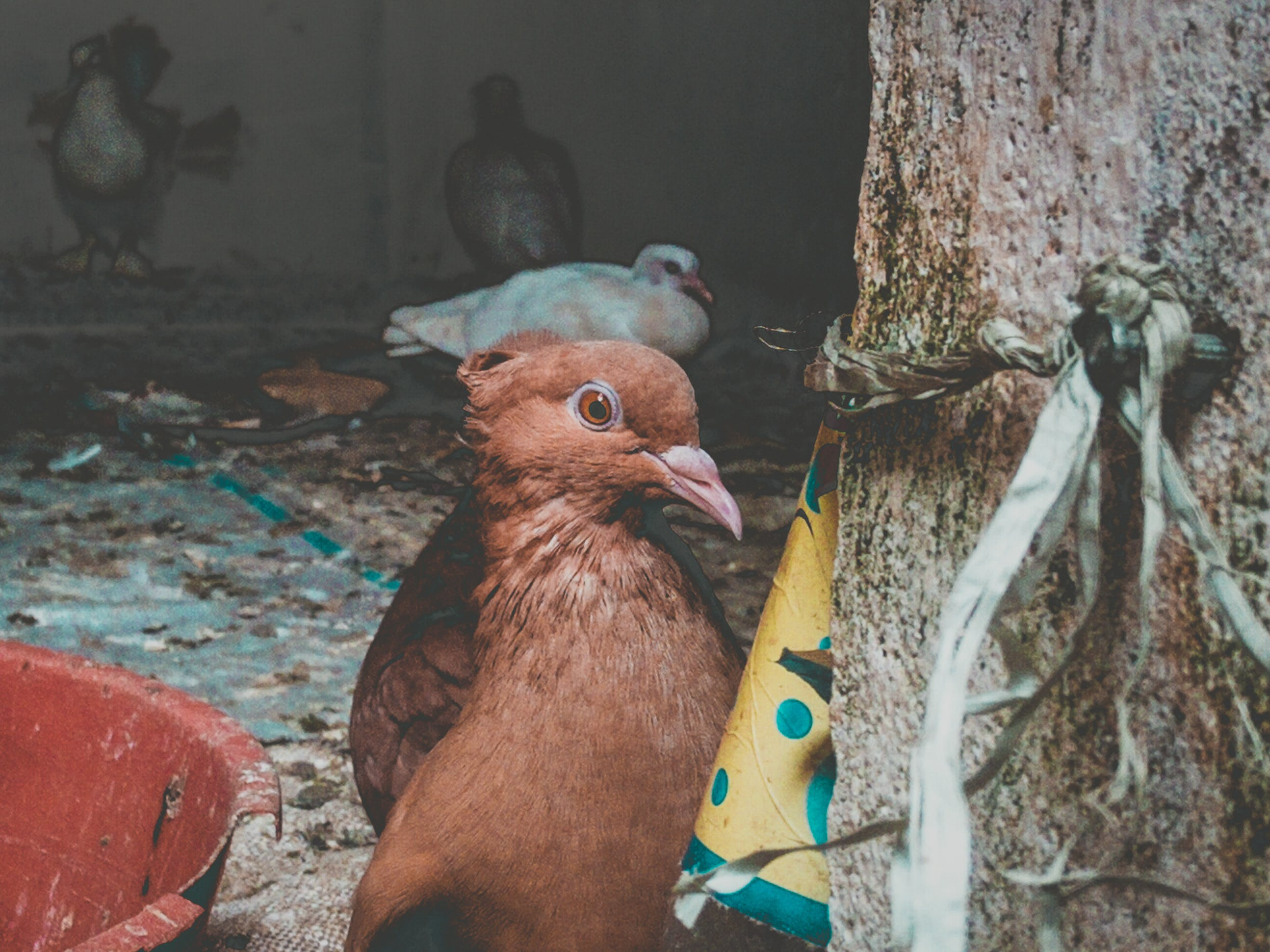 Foto profissional grátis de animais selvagens, animal, fotografia animal