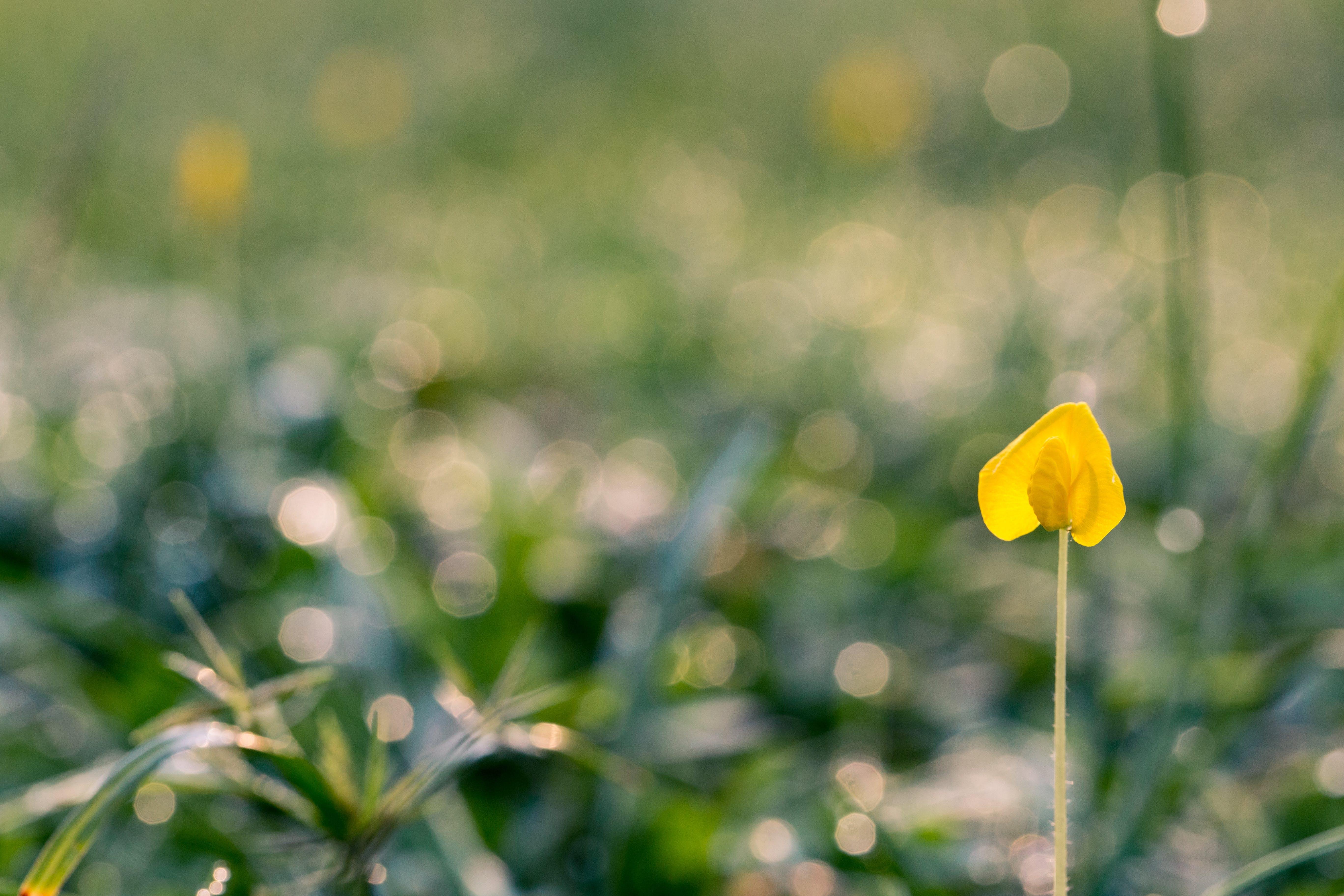 Kostenloses Stock Foto zu gras, pflanze, blume, makro