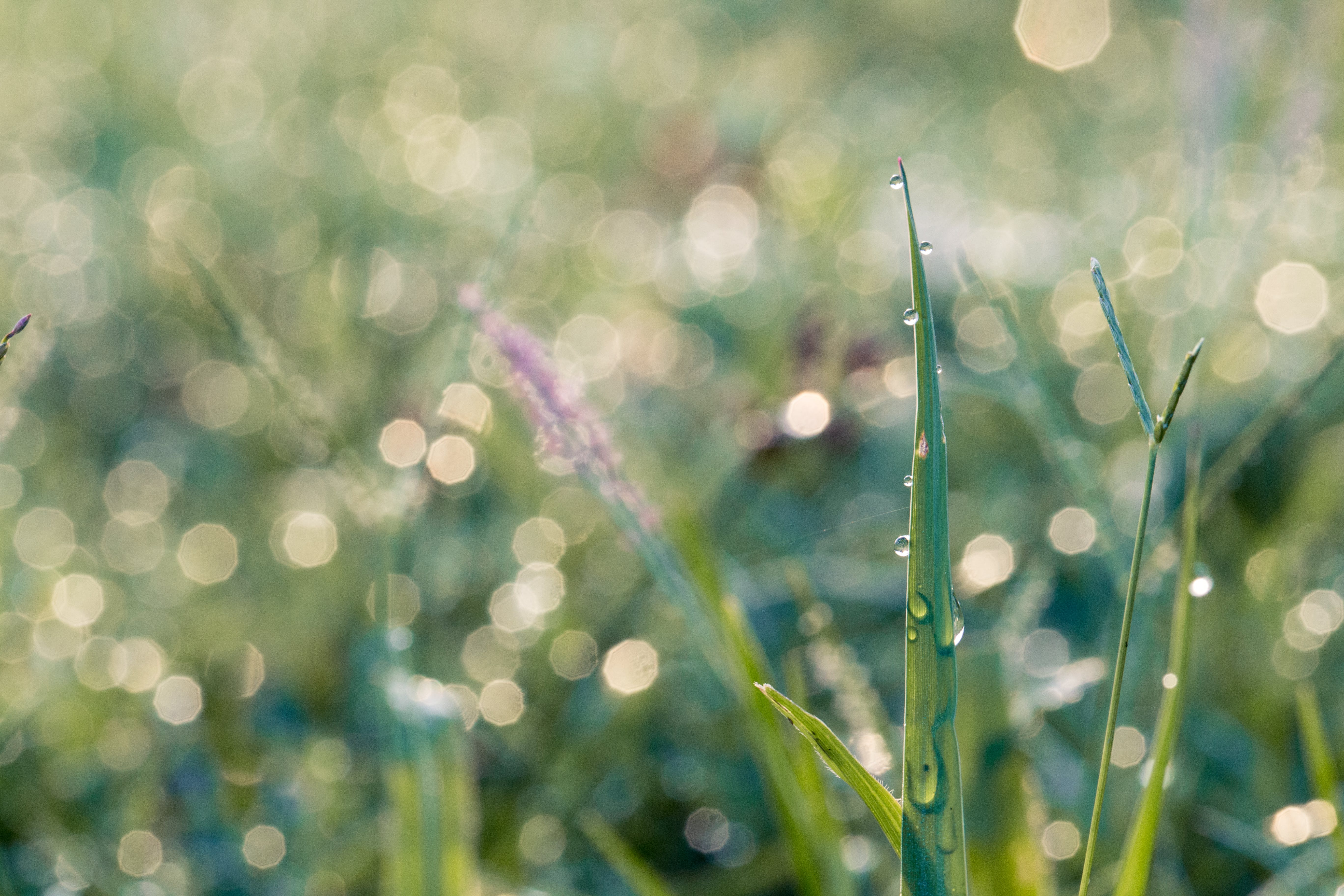 Macro Photography Of Blades Of Grass