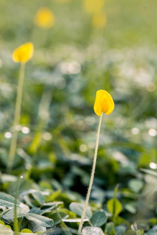 Immagine gratuita di bocciolo, fiori, flora, foglie