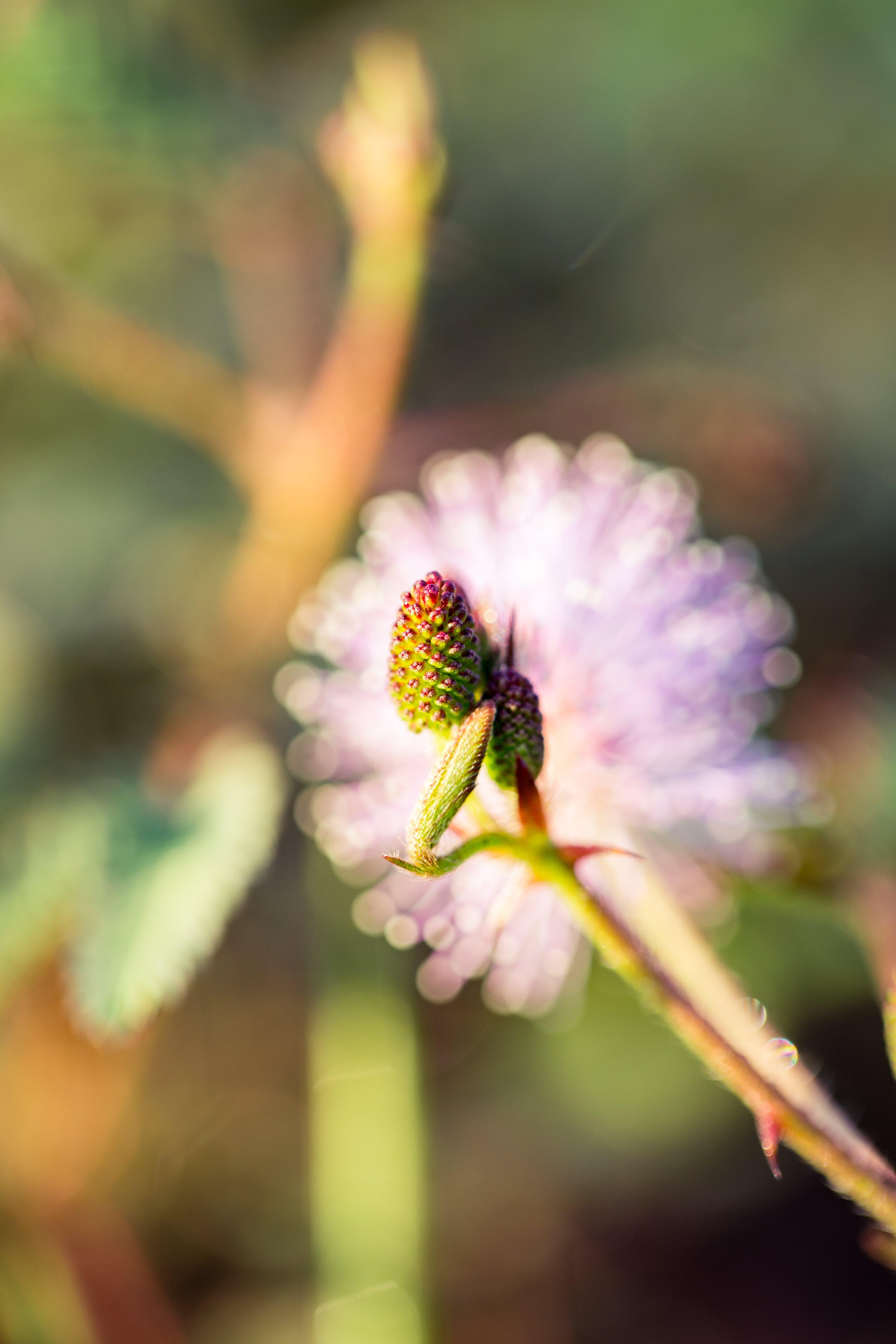 Selective Focus Photo Fo Pine Cone