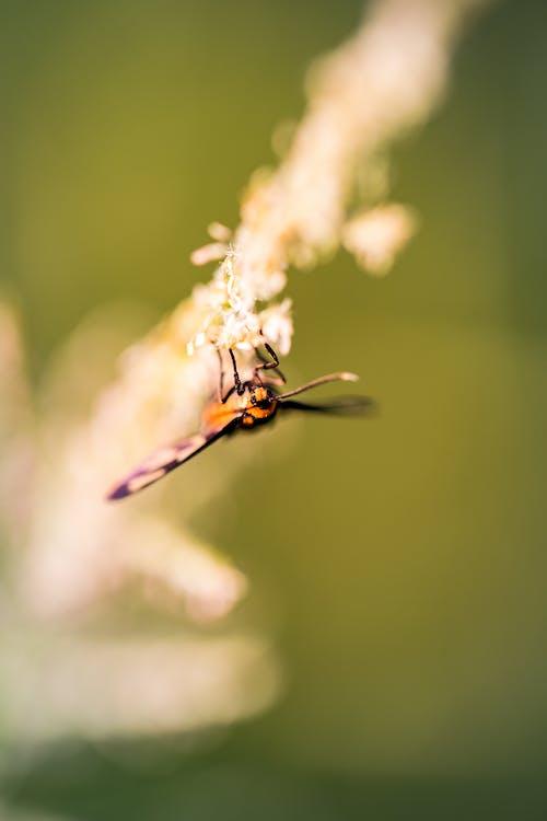 Fotos de stock gratuitas de flor, insecto, macro, mariposa