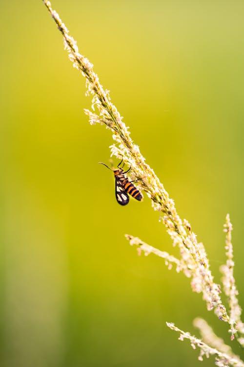 곤충, 벌레, 작은의 무료 스톡 사진