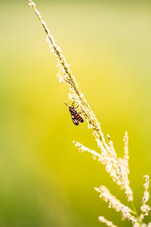 벌, 식물군, 태양의 무료 스톡 사진