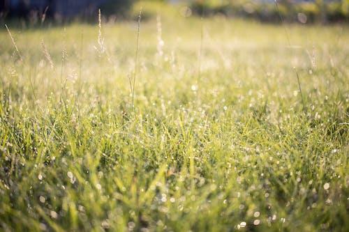 녹색, 식물, 이슬, 잔디의 무료 스톡 사진