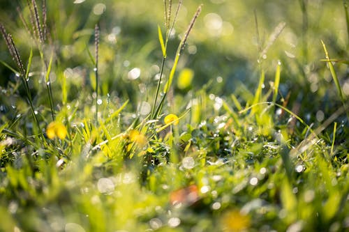 Kostenloses Stock Foto zu gras, grün, nass, rasen