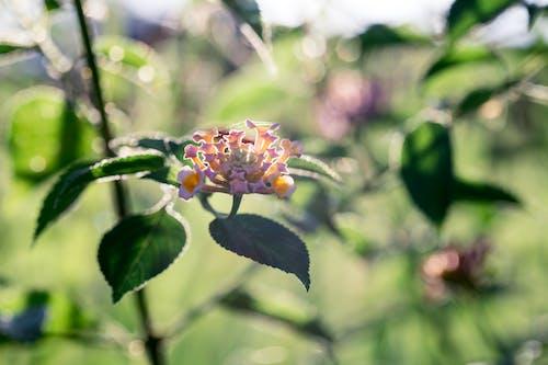Foto stok gratis berkembang, bunga-bunga, flora, kilang