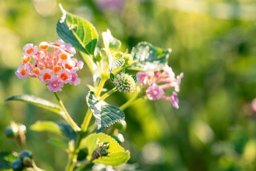Foto stok gratis berkembang, bunga-bunga, flora, kelopak bunga
