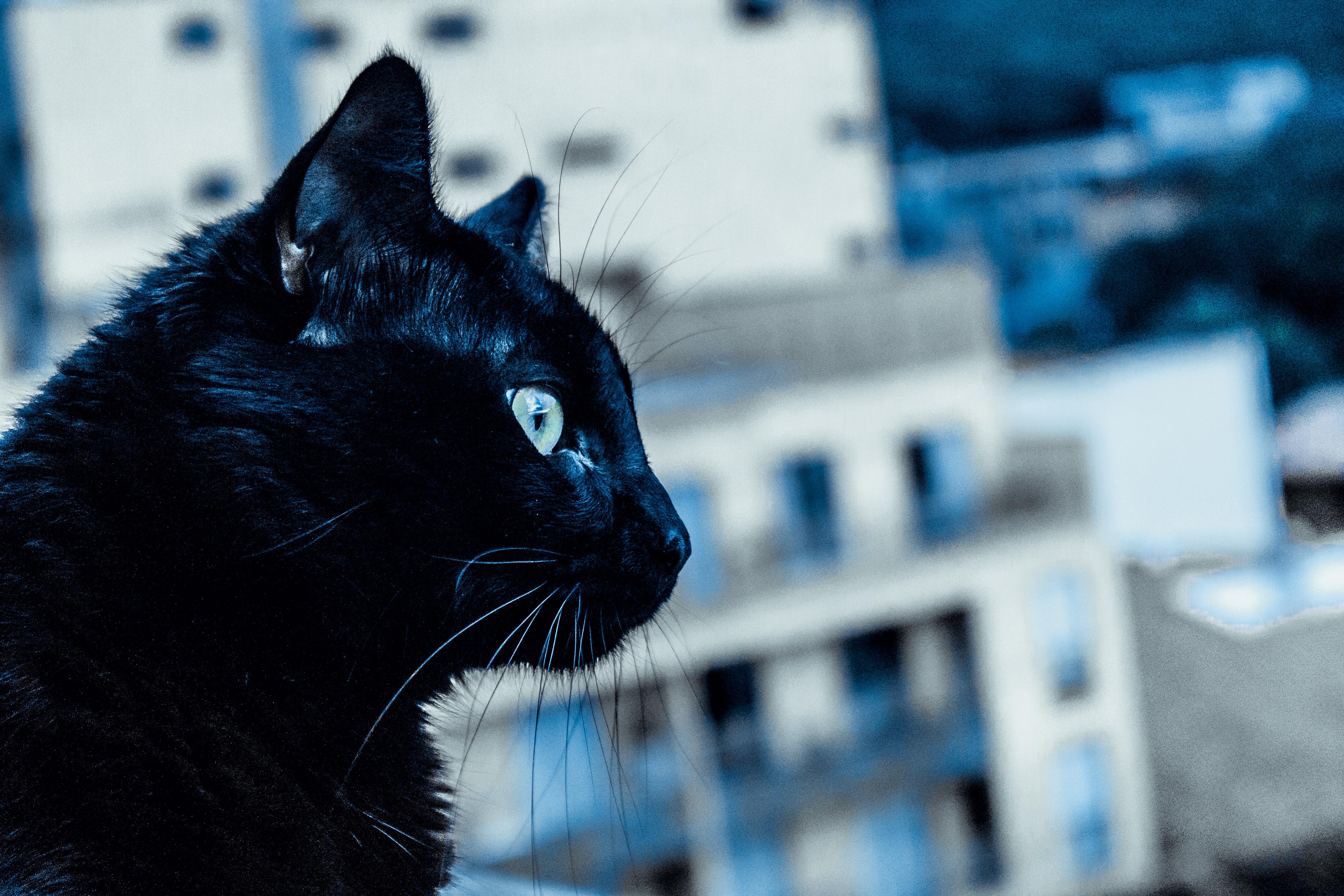 Www zdarma černá kočička