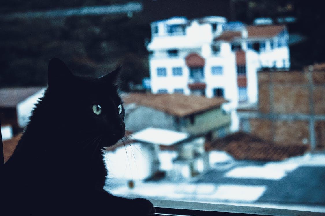 Black Cat Beside Window