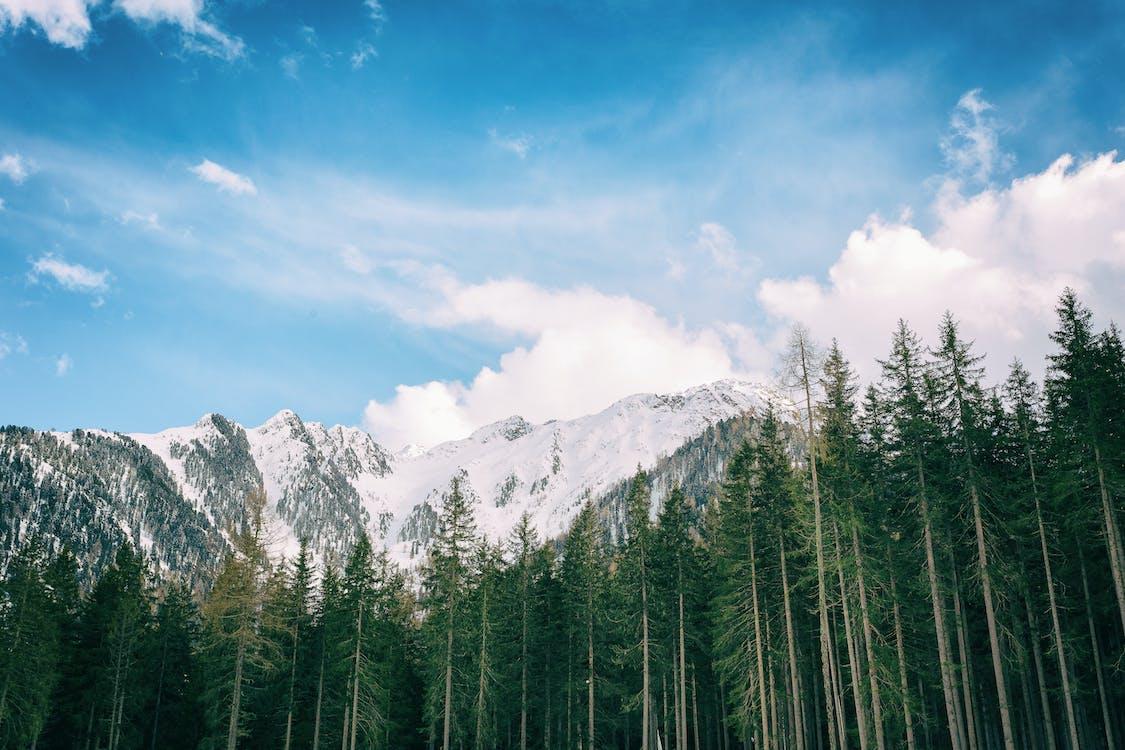 alberi, alto, ambiente