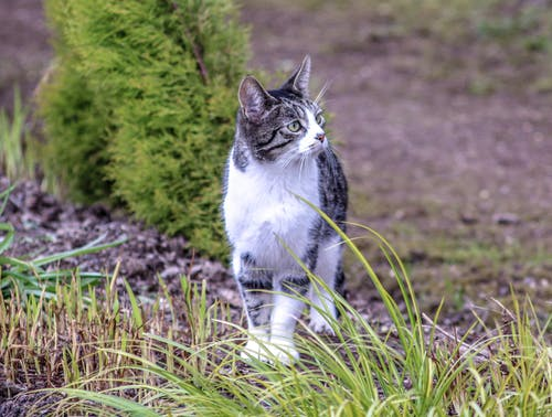 Foto d'estoc gratuïta de gat curiós, gat mirant bé, gat seriós, trufa el gat