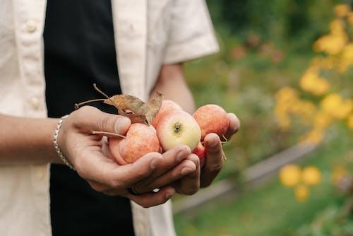 Ingyenes stockfotó alma, apple, Egészség témában