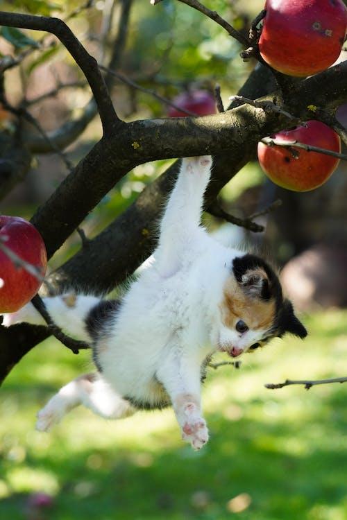 Ilmainen kuvapankkikuva tunnisteilla apple, eläin, kalikoo