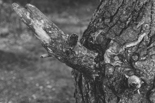#树, #黑与白 的 免费素材照片