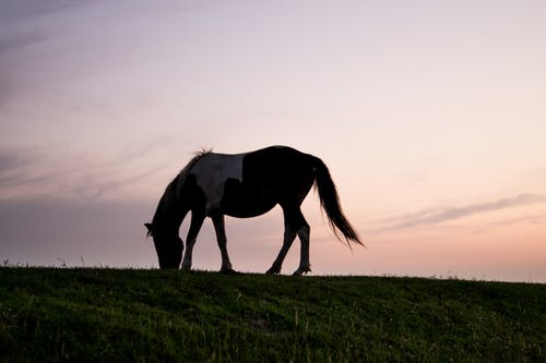 Silhouette Photography of Horse on Green Grass