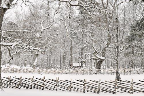 下雪的, 下雪的天氣, 公園, 冬季 的 免费素材照片