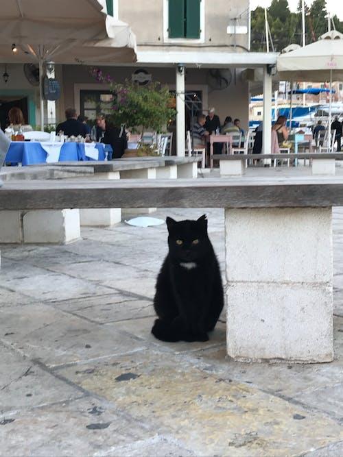 Free stock photo of cat, street
